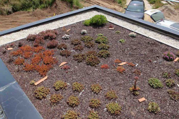 Maison briques rouges mono mur - Toiture végétalisée